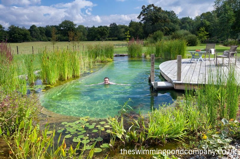 The swimming pond company ltd Natural swimming pool builders