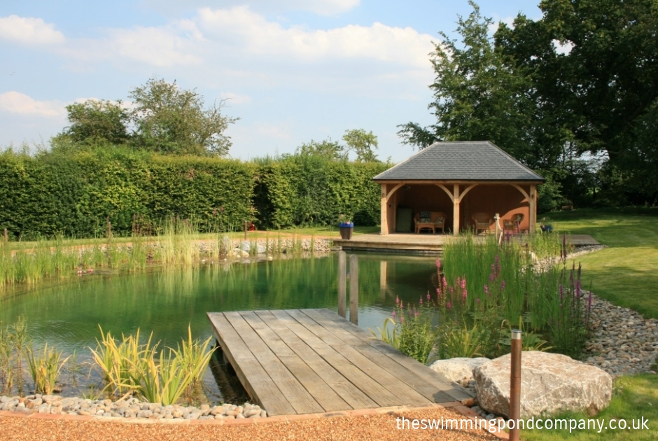 The swimming pond company ltd for How to build a natural swimming pool pond