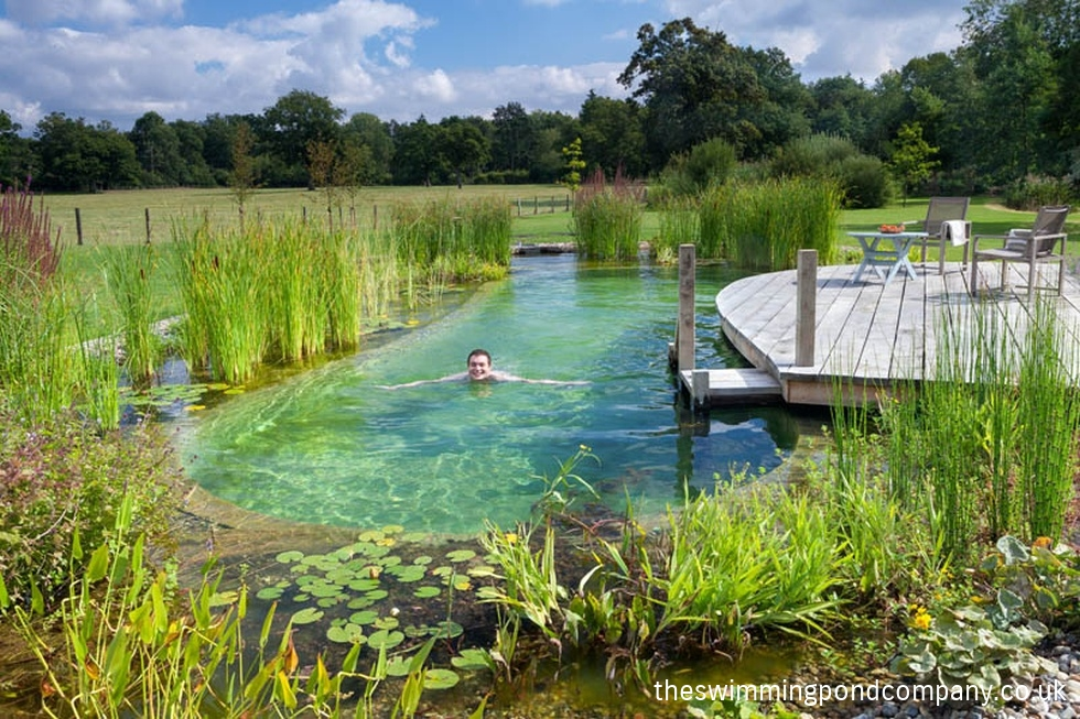 Hargham norfolk the swimming pond company ltd for Design of water harvesting pond